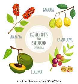 Vector icon set with exotic fruits and superfood: Guarana, Marula, Lucuma and Camu Camu. Organic vegan food.
