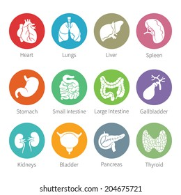 Vector icon set of human internal organs like heart spleen lungs stomach thyroid intestine bladder gallbladder pancreas kidneys and liver in flat style