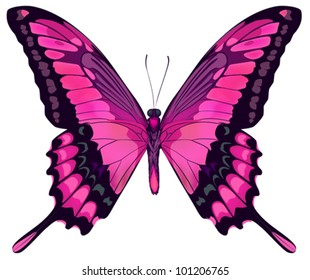 Vector Iillustration of Beautiful Pink Butterfly Isolated on White Background