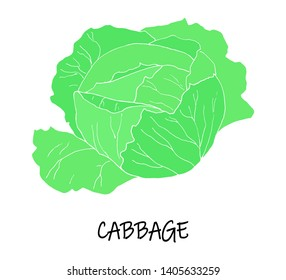 Vector illstration of cabbage. Green silhouette.  Art can be used for packaging design element; menu design.