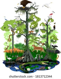 vector illstration - wetland or Florida Everglades landscape with different wetland animals