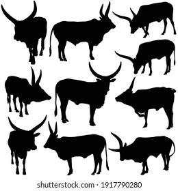 Vector illustartion of Ankole Watusi (Bos taurus indicus) silhouettes set
