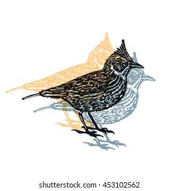 Vector Illustrated crested lark bird sign on white background