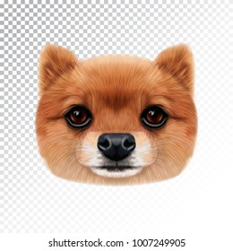 Vector Illustrated face of Pomeranian Spitz Dog. Cute head of a sable domestic dog for print on pillow.