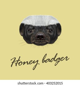 Vector Illustrated portrait of Honey badger. Cute face of ratel on yellow background.