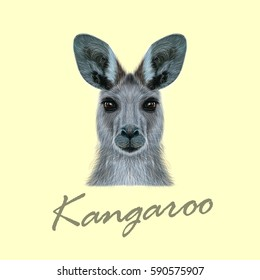 Vector Illustrated portrait of Kangaroo. Cute head of wild Australian mammal on beige background.