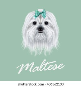 Vector Illustrated portrait of Maltese dog. Cute white fluffy face of domestic dog on green background.