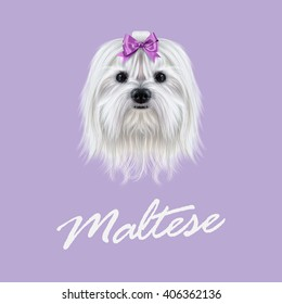 Vector Illustrated portrait of Maltese dog. Cute white fluffy face of domestic dog on violet background.