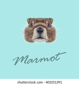 Vector Illustrated portrait of Marmot. Cute face of meadow Rodentia animal on blue background.