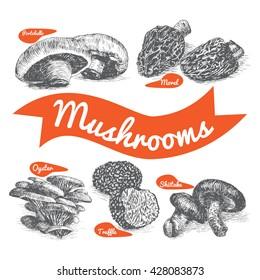 Vector illustrated Set #1 of Mushrooms. Illustrative sorts of mushrooms