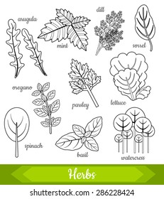 Vector illustration of 10 fresh herbs: arugula, mint, dill, sorrel, oregano, parsley, lettuce, spinach, basil, watercress in black and white. Organic vegetarian food. Vector design set.