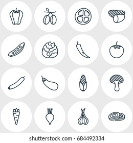 Vector Illustration Of 16 Food Icons. Editable Pack Of Aubergine, Tomato Slice, Root Vegetable And Other Elements.