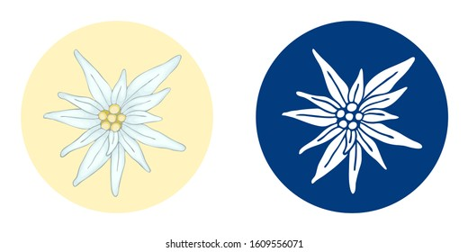 Vector illustration with 2 edelweiss flower white hand drawn on blue background and realistic. A simple icon for a logo. Leontopodium alpinum Bavarian and Alps and also mountain alpinism symbol