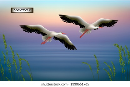 Vector illustration of 3D clipart cranes, storks fly in the morning over the lake, spring or summer landscape, large birds fly up from the grass on the shore