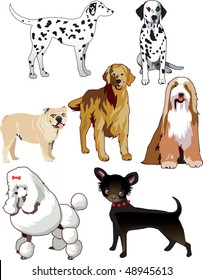 Vector Illustration of 7 dogs or puppies isolated.