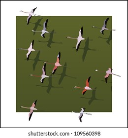 Vector illustration abstract background: top view of flamingos flying over the green river with shadows in white frame.