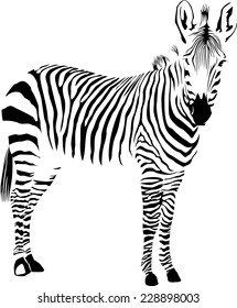 Vector illustration of abstract zebra on a white background