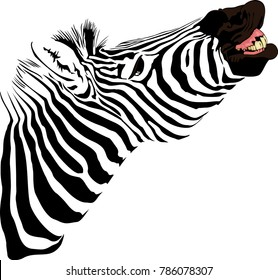 vector illustration of abstract Zebra showing teeth