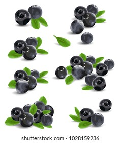 Vector illustration acai berries on white background.