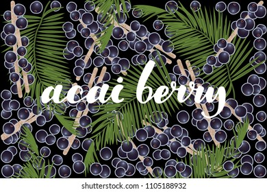 vector illustration of acai berry and leaf design with lettering acai berry background black and berry EPS10