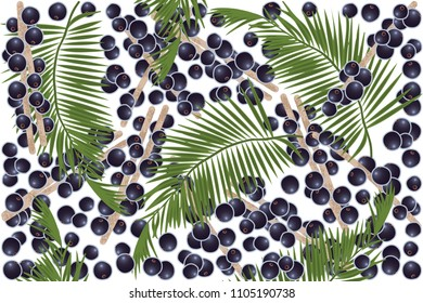 vector illustration of acai berry and leaf design background white and berry EPS10