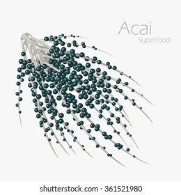 Vector illustration of acai for your design.