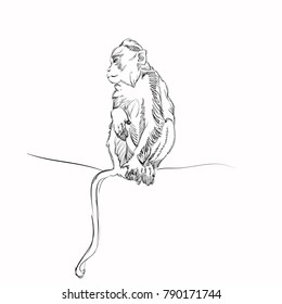 Vector Illustration of Adorable Ape. Sketched Little Cute Monkey. Monochrome Freehand Drawing. Kids Style Graphic. Stylized Cartoon Beautiful Marmoset. Realistic Pen Drawing Imitation. Animal Art.