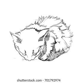 Vector Illustration of Adorable Cat. Sketched Little Cute Kitten. Monochrome Freehand Drawing. Kids Style Graphic. Stylized Cartoon Beautiful Kitty. Realistic Pen Drawing Imitation. Animal Art.