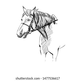 Vector Illustration of Adorable Horse with Harness. Sketched White Cute Equine. Freehand Monochrome Drawing of Animal. Linear Graphic. Stylized Face of Beautiful Pet. Realistic Pen Drawing Imitation