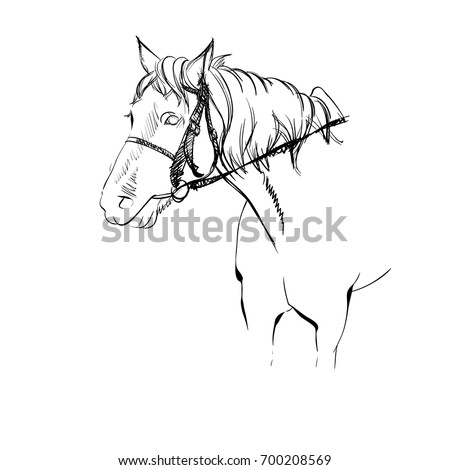 Vector Illustration Adorable Horse Harness Sketched Stock Vector
