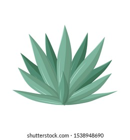 Vector illustration of agave and tequila logo. Graphic of agave and blue Stock vector illustration.