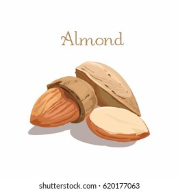 Vector illustration of almond