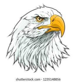 Vector illustration of American bald eagle head.