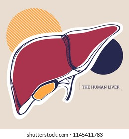 Vector illustration of an anatomical liver for anatomical demonstration and any kind of card of flyers
