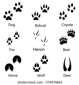 Vector illustration animal and birds footprints with names icon set. Set foot prints wild animals, illustration of black silhouette.