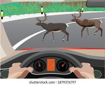 Vector Illustration of Animal Crossing road
