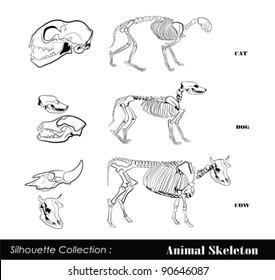 Imágenes, fotos de stock y vectores sobre Anatomia De