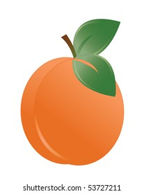 Vector illustration of the apricot over the white background