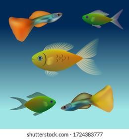 Vector illustration of aquarium fish guppies and colored gourami