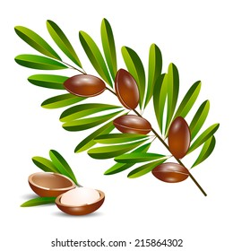vector illustration argan tree branch on a white background