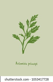 Vector Illustration. Artemisia princeps (mugwort) illustration with color.