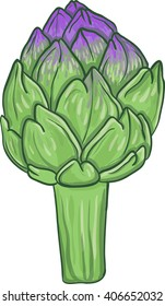 Vector illustration artichoke isolated, green with violet top.