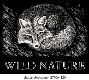 Vector illustration. Artistic drawing of cute fox lying on the grass on scratchboard. White scratches on black background. Wild nature. With handwritten text