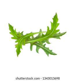 Vector illustration of arugula