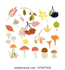 Vector illustration. Autumn set, consisting of multi-colored leaves and wild mushrooms. Decorative elements. Collection.