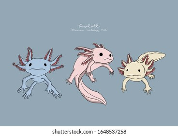 Vector Illustration of Axolotl, Mexican Walking Fish