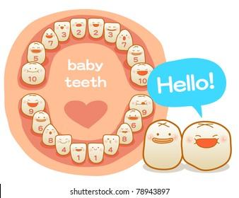 Vector illustration, baby teeth, first teeth, milk teeth, milk tooth, primary teeth, temporary teeth