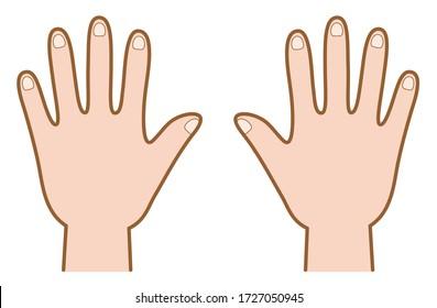 Vector illustration of back of hand (both hands)