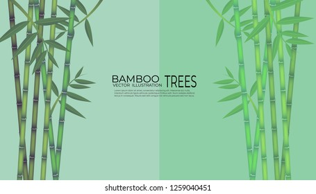 Vector illustration of bamboo on background, design of Chinese and Japanese bamboo trees, stems and leaves.