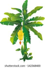 vector illustration of a banana tree